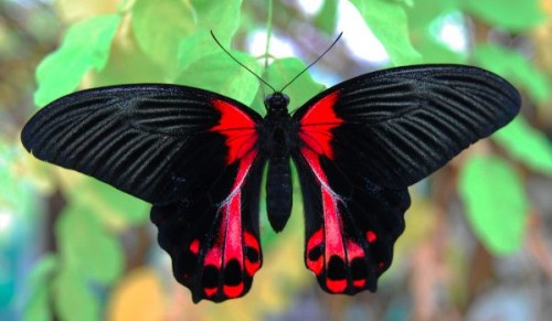 Butterfly World, Wootton, Ryde – Discounted Entry Passes for Adults, Kids and Families – normally up to £22.99 deal price from £2.99