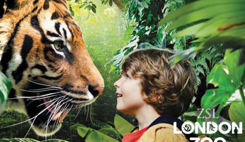 ZSL London Zoo Day Trip including Coach Travel, Ferries and Admission – deal price for only £53.00