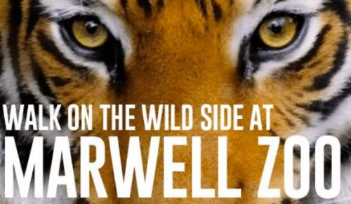 Marwell Zoo, Hampshire – Day Trip direct from the Island including Coach Travel, Ferry Crossings and Entrance – deal price £43.00