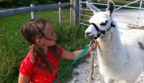 Godshill Park Farm, Godshill – Two-Hour Llama Trek for Adults & Kids – normally up to £30.00 deal price £18.00