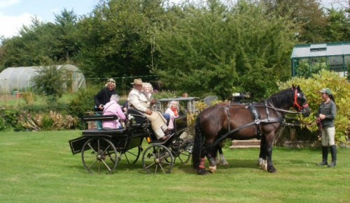 Farmland Carriage Drives, Godshill – Farmland Drives by Horse and Carriage for up to Four People – normally £100.00 deal price £69.95