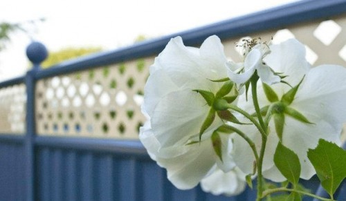 If you love your garden…why not treat it to something special at Colour Fence – Promotional Feature